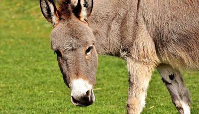 吃驴肉对牛皮癣好吗 不过敏可以适量吃点